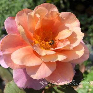 【庭】一応三番花