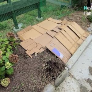 段ボールマルチで雑草対策&コニファーの植え付け