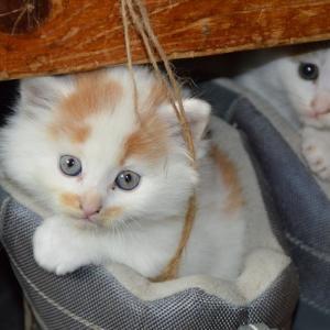 保護犬・保護猫のペット保険 必要性と選び方