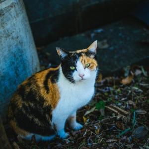 ペットの里親探し 猫を保護し里親を探したときの話 猫の里親募集方法・必要なものや保護団体、病院でのやり取りまとめ