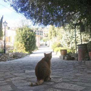 バルデモサのおすすめホテル厳選1選!猫好きにはたまらない可愛い宿泊施設はいかが?山羊もね