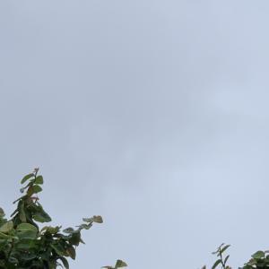今朝も雨ふり