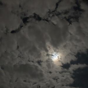 もうすぐ満月ですね🌕