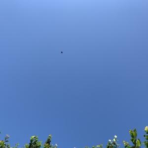 今日の空☀️