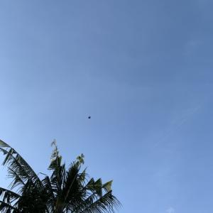今日の午後は凧が少なめ🪁