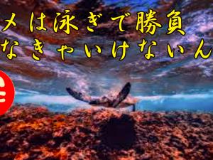 斉藤一人さん カメは泳ぎで勝負しなきゃいけないんだ
