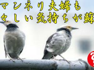 斉藤一人さん マンネリ夫婦も瑞々しい気持ちが蘇る
