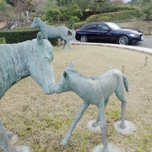 野間馬ハイランドの乗馬体験 愛媛県今治市