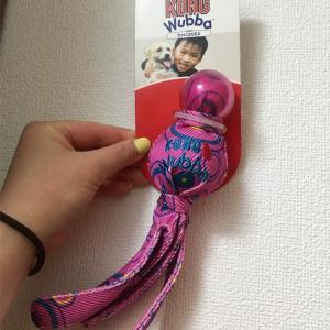 KONG ウァバコスモス〜KONG Wvbba〜タコみたいな形のおもちゃ