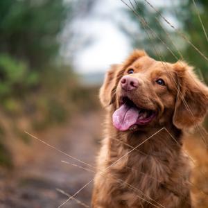犬のおやつを選ぶときの10のポイント