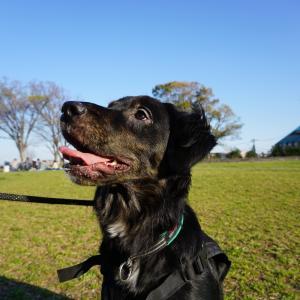 【犬のリードの選び方】我が家は2種類、短いリードとクライミングロープ