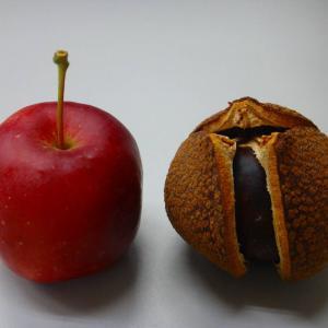 ミニリンゴ