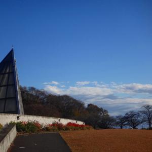 岩宿博物館と曙杉(メタセコイア)