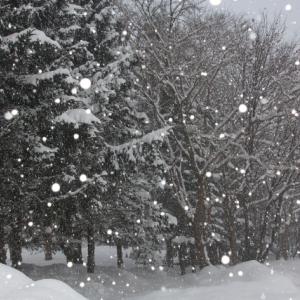 冬のダイエットはビタミンD不足に気をつけて!