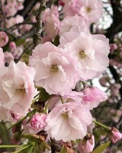 花見とギンブナ