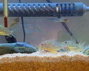 熱帯魚と暑さ対策