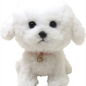 東方神起チャンミンファンの間で最近話題のビションフリーゼのぬいぐるみ 愛犬ポッチに似てる?