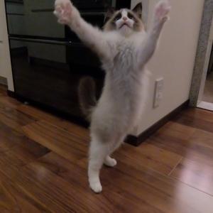 わぁ~い。万歳今日は猫の日