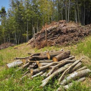 ミニ住宅地の裏斜面の薪をいただく