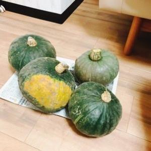 マズいかぼちゃと2択の恐怖