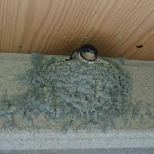 プラスチックでできた鳥の巣に見る環境汚染