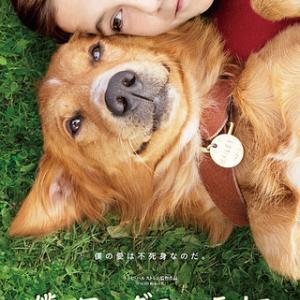 映画『僕のワンダフルライフ』(2017年アメリカ映画 ラッセ・ハムストレム監督) 転生する犬