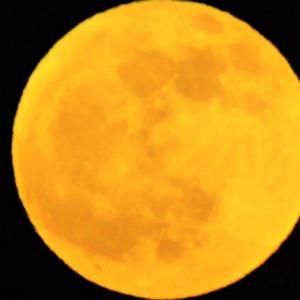 今日は 今年最後の満月です
