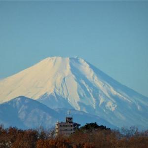 昨日の富士・今朝のサボテ