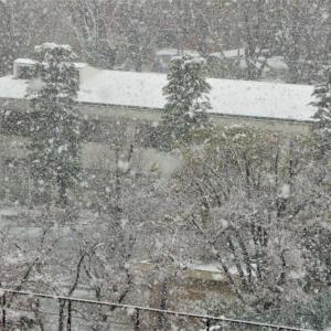 3月29日 都区内北東部にも降雪