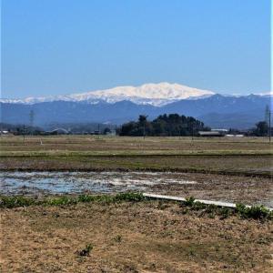 残雪輝く 加賀の白山