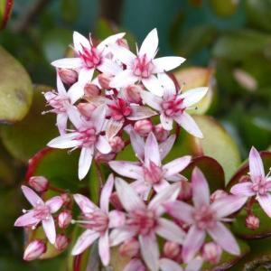 今咲いて居る 金の生る木の花