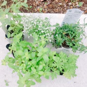 エクステリア:花壇を楽しもう その1