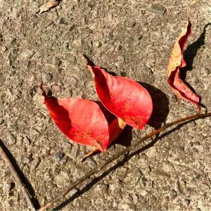 秋はどこへ