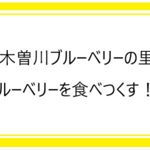 「木曽川ブルーベリーの里」でブルーベリーが食べ放題!!