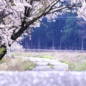 「桜の咲く頃にはいつも思いだす…」episode-17 最終話