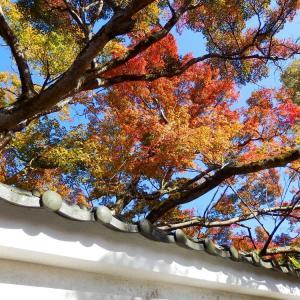 京都の神社・仏閣の紅葉①
