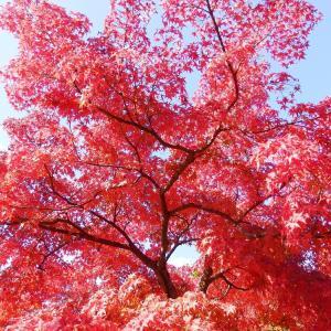 京都の神社・仏閣の紅葉③