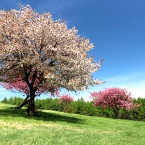 「桜の咲く頃にはいつも思いだす…」episode-15