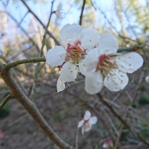 春の体調不良の2大原因は「PM2.5」と「瞑眩」