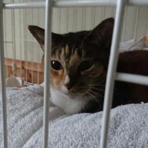 猫と人間の白血病の違い