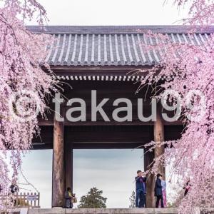 今年はどこの桜を見に行こうかな その後