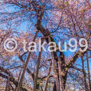 【書評】おススメしません「埼玉絶景散歩2 ~里山歩きと季節の花めぐり~」