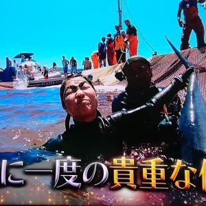 【世界の果てまでイッテQ】イモトアヤコがサルディーニャでマグロ漁!