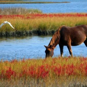 「馬を水辺に連れて行けても、水を飲ませることはできない」