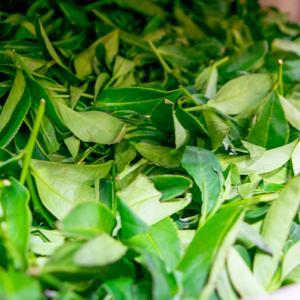 台湾茶に関する名称をまとめてみました(2)