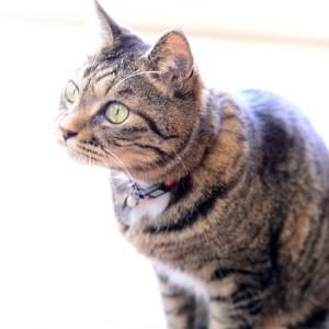 サロンの看板猫