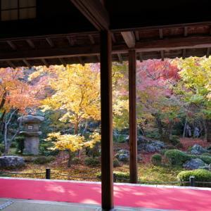 紅葉(もみじ)狩り - 京都(1)