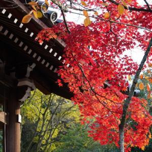 紅葉(もみじ)狩り - 京都(2)