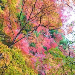 紅葉(もみじ)狩り - 京都(4)