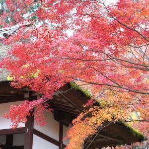紅葉(もみじ)狩り - 京都(5)